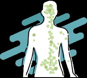I recettori del Sistema Endocannabinoide